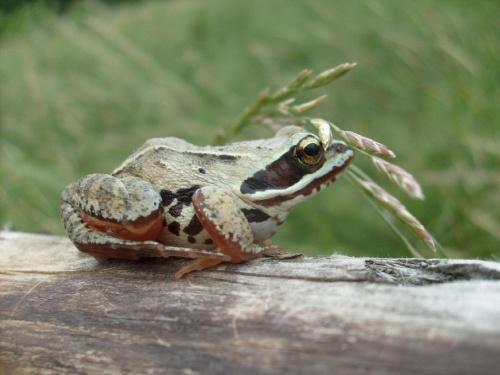 Żaba ucieka ;) #żaba